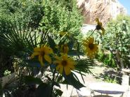 solanagranada-garden-flowers