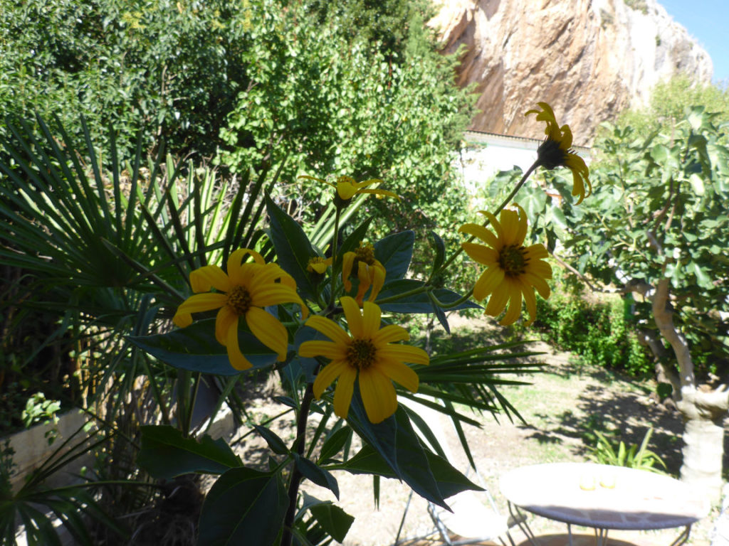 Solana de Granada - Climbing and outdoor hostel: garden flowers