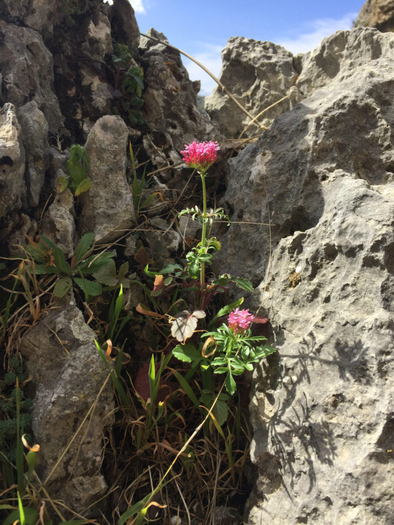 Solana de Granada - Climbing and outdoor hostel: ecotourism flowers in the rock
