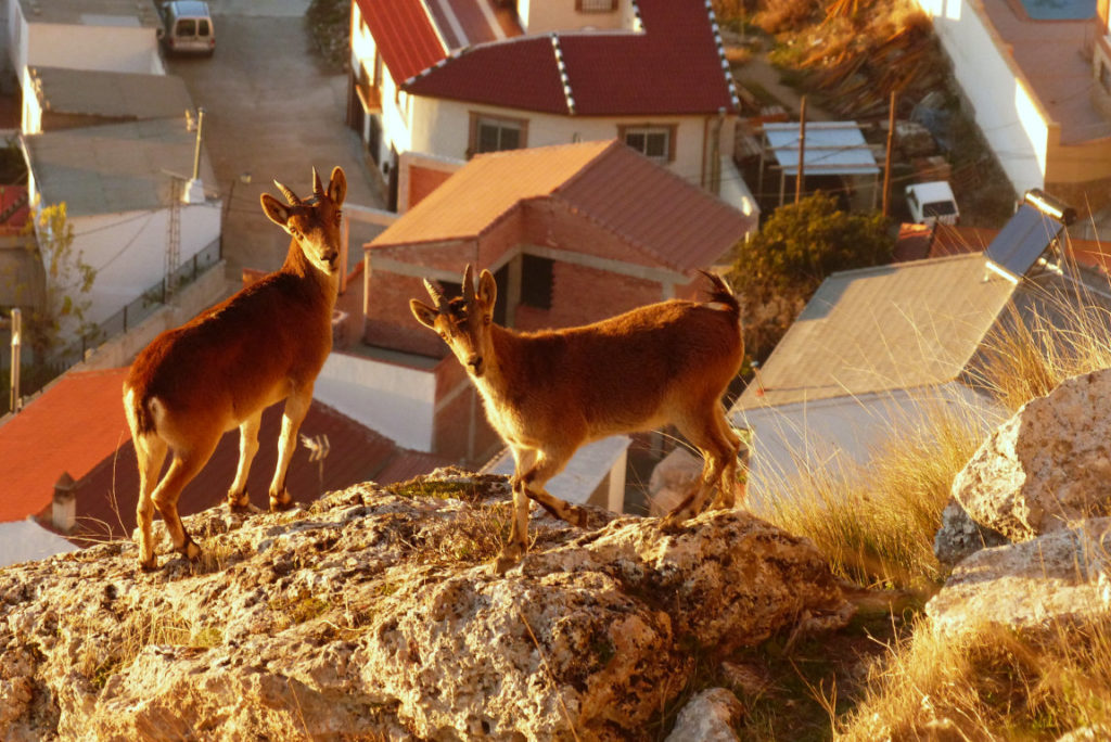 Solana de Granada - Climbing and outdoor hostel: ecotourism mountain goats
